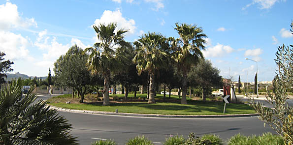 TLC by ELC means Malta's roundabouts are oases of green