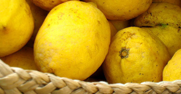 Malta&#039;s Lemons in abundance: great for homemade lemonade this time of year