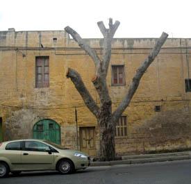 A standing stump