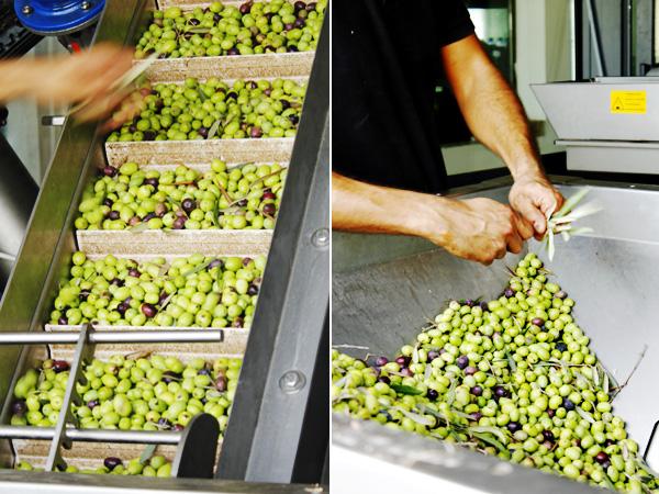 Malta's olives at the press