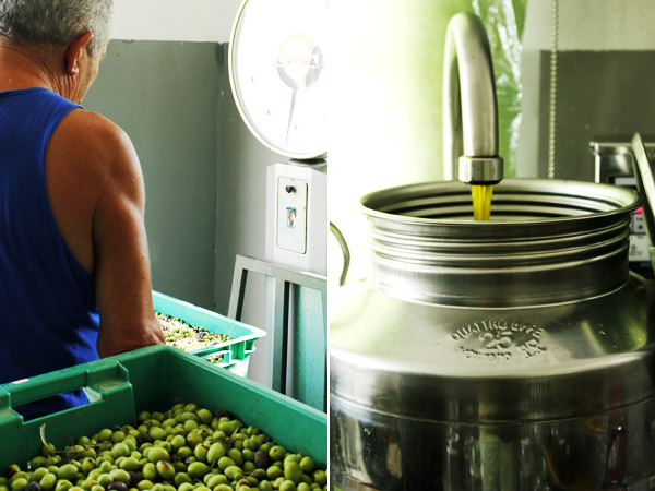 Maltese olives weighing at the press