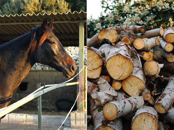 Horse on a Maltese smallholding