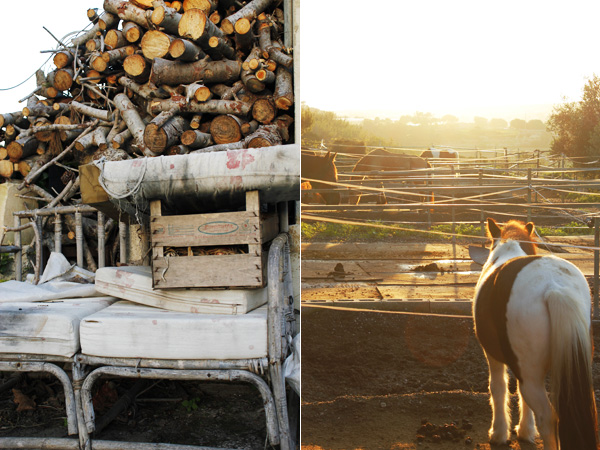 Pony & woodpile on a Maltese farm